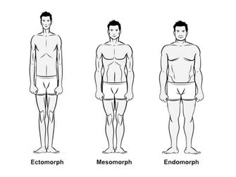 somatotypes, trainen, lichaamsbouw, ectomorph, mesomorph, endomorph, lichaamstypen