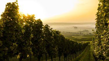 wijnboer, bordeaux, wijn, klimaat, nederland