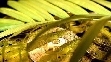 duurzame alternatieven voor bitcoin, cardano, crypto