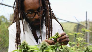 gezondheidsvoordelen, gezond, wiet, hasj, cannabis