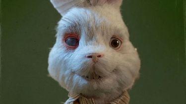 Hollywood-sterren tackelen dierenproeven met shockerende korte film