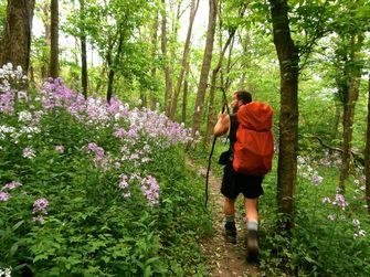 pennsylvania, appalachian trail, wandelen, hiken, amerika, verenigde staten