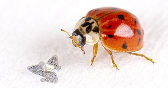 microfliers, vliegende microchip, aarde redden