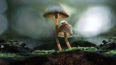 fantastic fungi, documentaire, netflix, paddenstoelen, schimmels, natuur