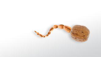 Dagelijks een handje noten zorgt voor ijzersterk zaad
