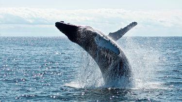 walvissen, beurs, beïnvloeden, invloed, beleggen