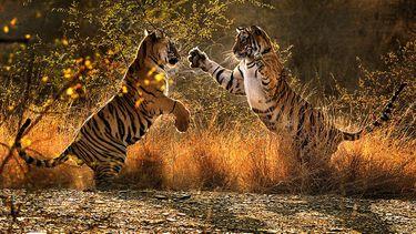 tijgers, netflix, documentaires, natuurdocumentaires, our planet