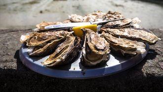 oesters rapen, beste plekken in nederland, seizoen