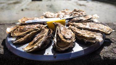 oesters, voeding, eiwitten, spieren, spieropbouw