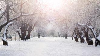 Dumpert Sneeuw ultieme winterpret compilatie