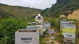 Bee & Flow Manuka honing 1